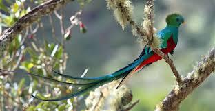 Monteverde 5